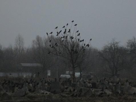 Cementerio judío de Berdichev