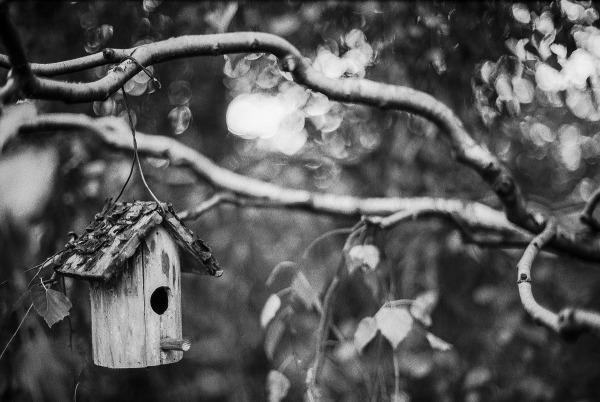bird-house-1708690_1920